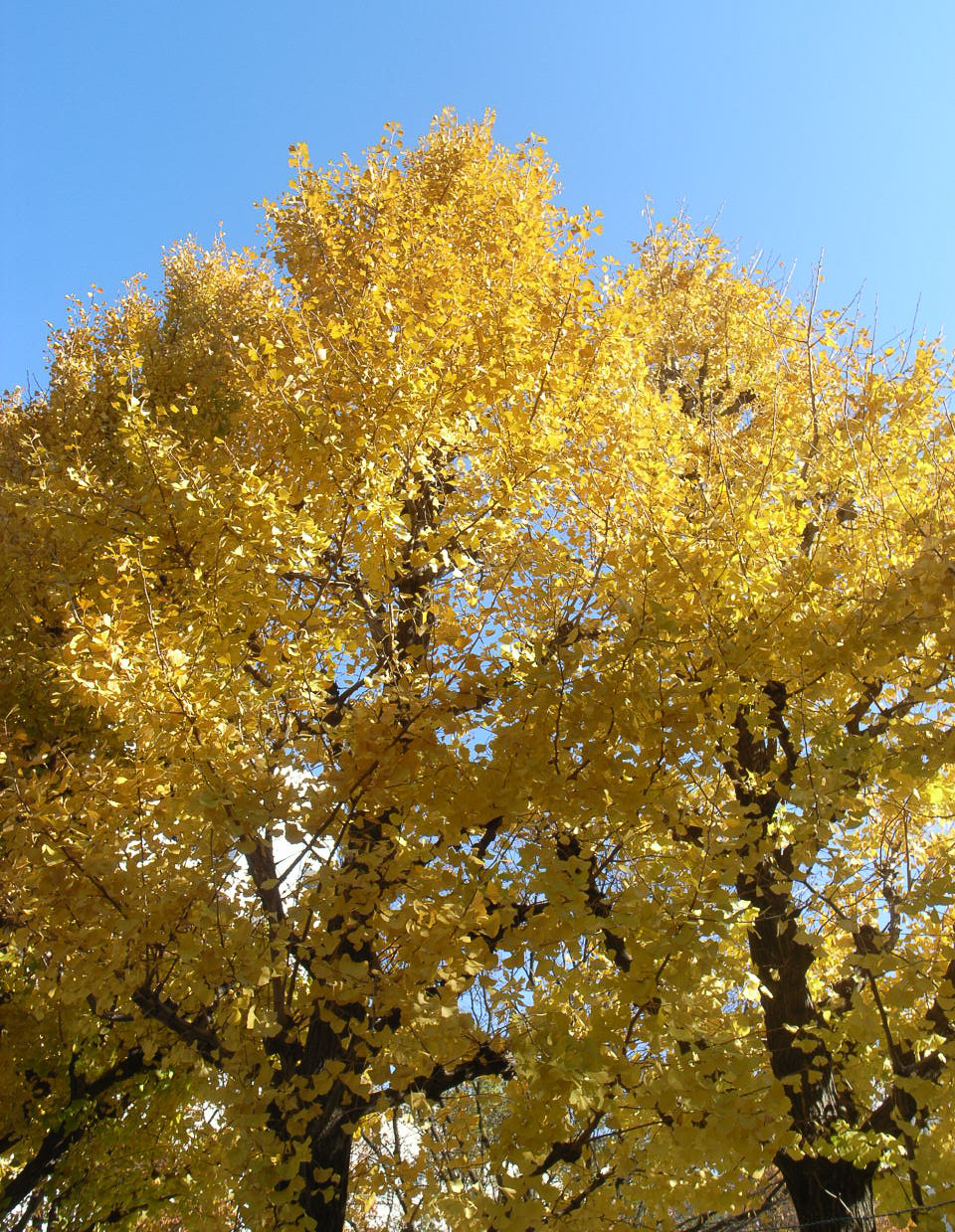 Komorebi - a Japanese word that roughly means 'sunlight filtering through the leaves of trees'